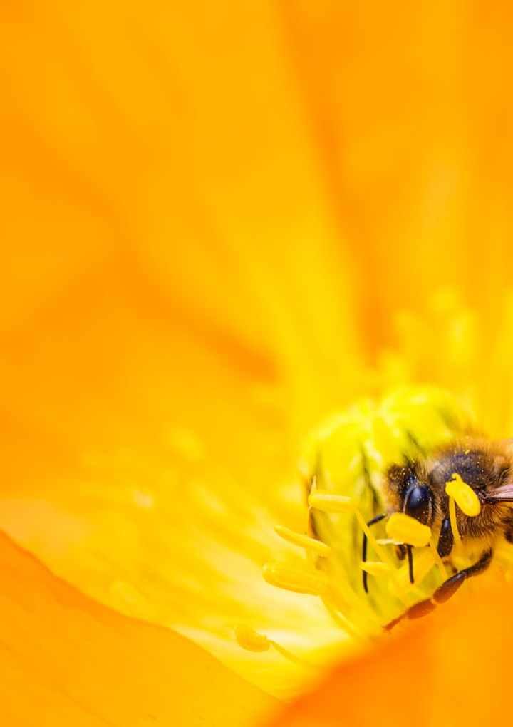 El sentido del vuelo de las abejas