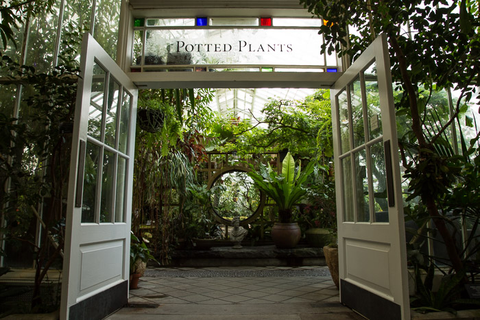 Potted Plants Room at Conservatory of Flowers in San Francisco | Lost Not Found | SF Travel Guide