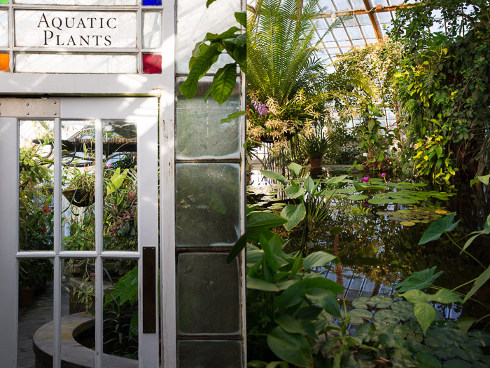 Dyptic of Lily Pads in Aquatic Room and signage at Conservatory of Flowers in San Francisco | Lost Not Found | SF Travel Guide
