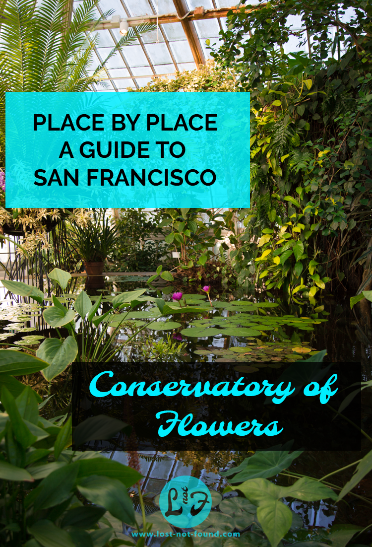 Lily Pads in Aquatic Room of Conservatory of Flowers in San Francisco | Lost Not Found | SF Travel Guide