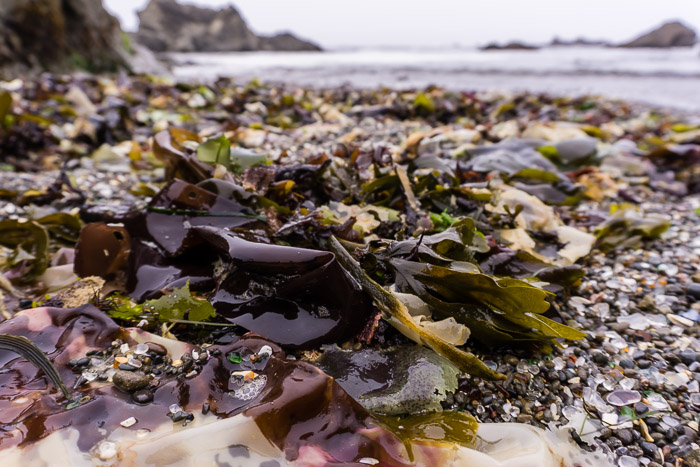 Seaweed on Glass Beach Fort Bragg CA | LOST NOT FOUND | Mendocino CA Camping Weekend