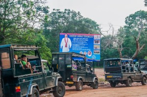 Trucks ready for a safari in Yala National Park in Sri Lanka | LOST NOT FOUND | Sri Lanka Itinerary | Sri Lanka Travel | Asia Travel | Things to Do in Sri Lanka | 10 Days in Sri Lanka