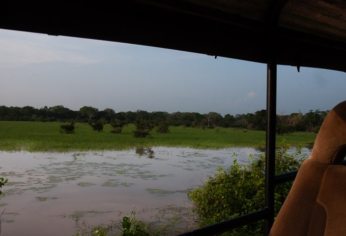 View of Yala National Park from Safari Car in Sri Lanka | LOST NOT FOUND | Thoughts & Feelings Sri Lanka