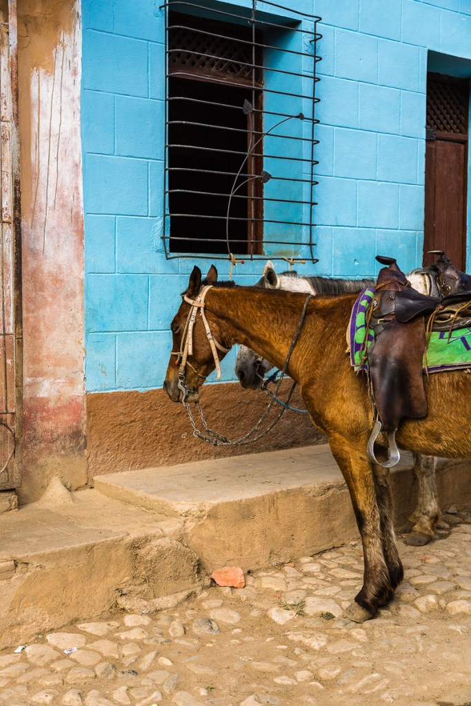 Horses tied up in front of a building in Trinidad Cuba | LOST NOT FOUND| Horses | Cuba | Trinidad | Street Photography