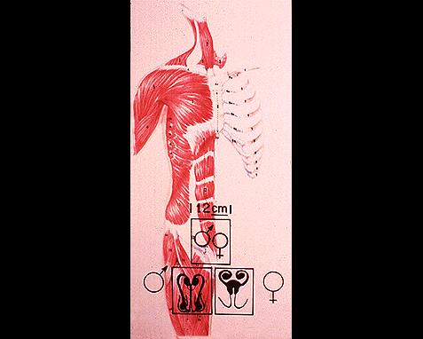 025 - Anatomy 8, World Book