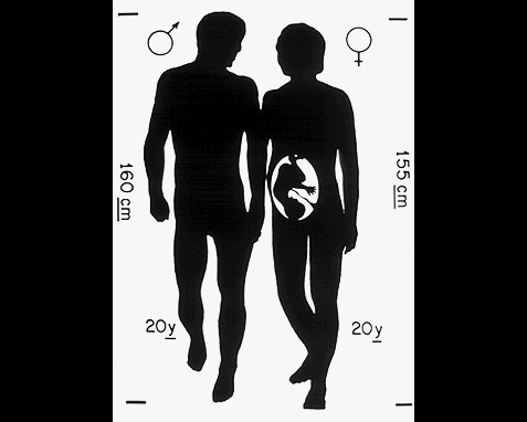 032 - Diagram of male and female, Jon Lomberg
