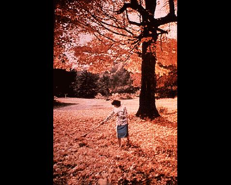 048 - Fallen leaves, Jodi Cobb