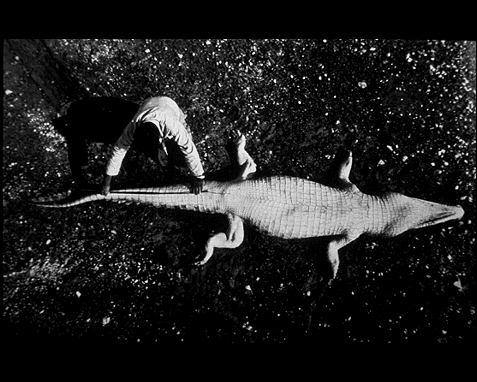 057 - Crocodile, Peter Beard