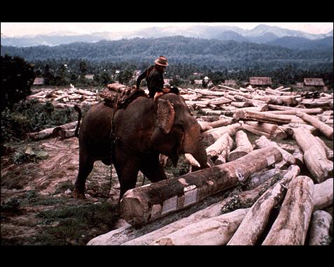 067 - Elephant, Peter Kunstadter