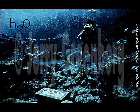 078 - Underwater scene with diver and fish, Jerry Greenberg