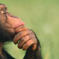 Via vaste bezoeker Jordy een tekst over kunst en apen. Met eigenlijk de vraag, waar kunst vandaan komt. Tekst die zeker de moeite waard is om te lezen. Dus vandaar […]