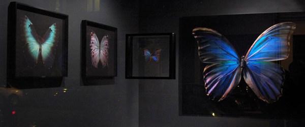 Na mooie ijsbergen, zijn ook mooie vlinders niet lelijk. Mooie vlinders als kunst, dat kennen we natuurlijk al van Damien Hirst. Deze plakt echte vlinders op een gekleurd vel en […]