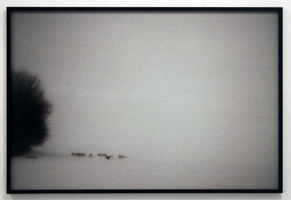 LJAD Creyghton - A Winter's Tale Waalwijk - 100x150cm C-print op dibond