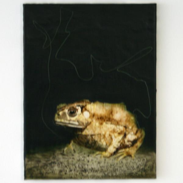 Seth Pick - Amphibian - 40x30cm Olieverf op polyester
