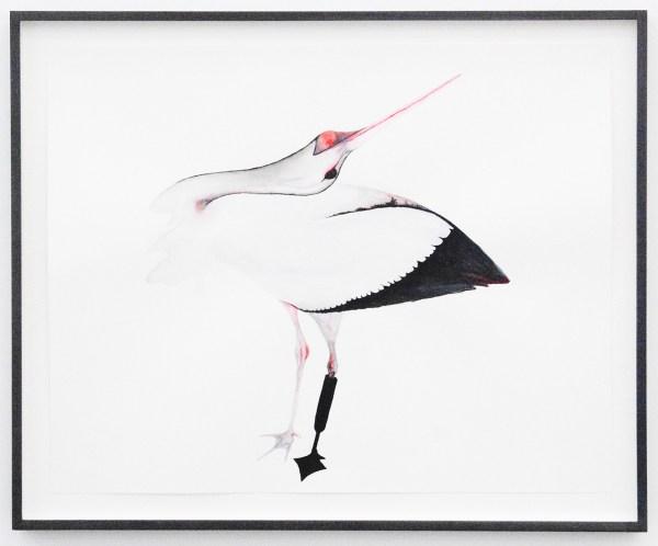 Grace Schwindt - Stork - 40x50cm Aquarel en oost-indische inkt op papier
