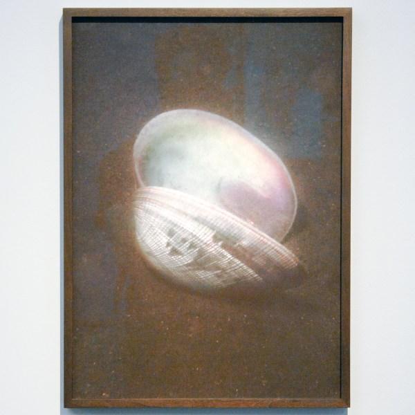 Elspeth Diederix - Shell - 50x36cm C-print