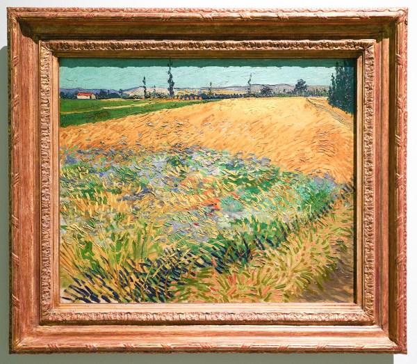 Vincent van Gogh - Korenveld - Olieverf op doek op karton, 1888