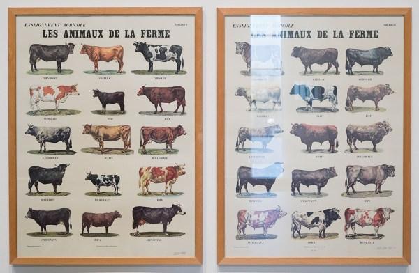 Marcel Broodthaers - Les Animaux de la ferme - 82x60cm Kleuren offset
