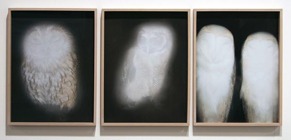 Conrads - Anna Vogel