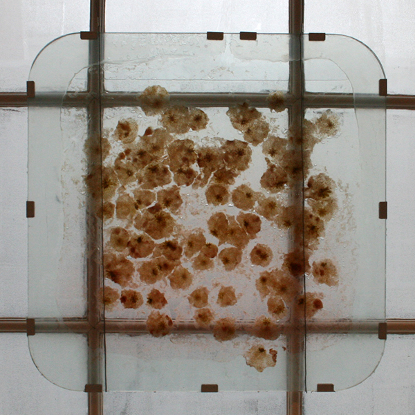 Egied Simons - Fruits Exploded View - 70x70x3cm Fruit in glas