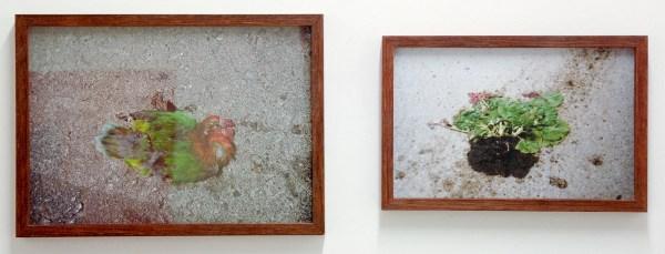 Janis Rafa - Roadkill #1 (Lexicon Series) - 12x8cm & 14x10cm Tweeluik, Beelden via internet