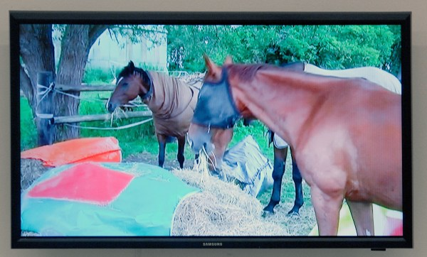 Klaas Kloosterboer - 15173 (paarden eten hooi uit pak) - 8,02minuten HD Video