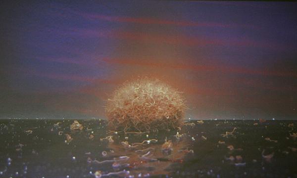 Lorenz Olivier Schmid - Tubiflex Sunset