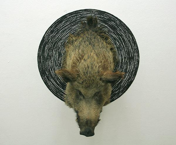 Niklas van Woerden - Zonder Titel - Everzwijn, hout, ijzer, touw, geweer en houtskool (II)