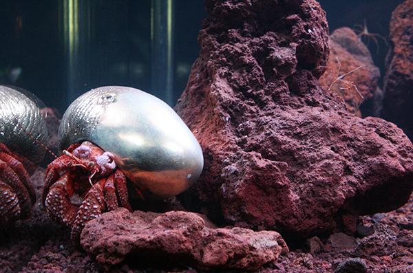 Pierre Huyge - Zoodram 4 - Aquarium met levend marine-exosysteem en masker