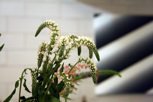 Plant en Linda Arts