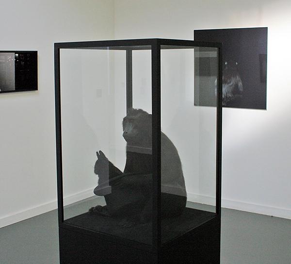 Silvia B - Le Nocturne - Opgezette kuifmakaak, opgezet dwergkonijn, hoge hoed, vlinderstrik en vitrine