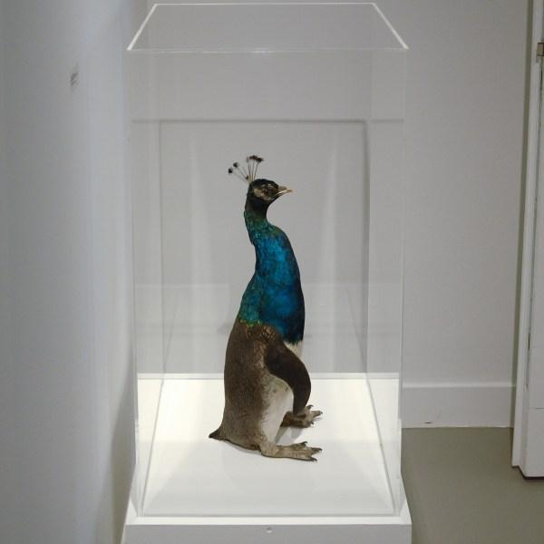Thomas Grunfeld - Misfit (Penguin, Peacock) - Taxidermie