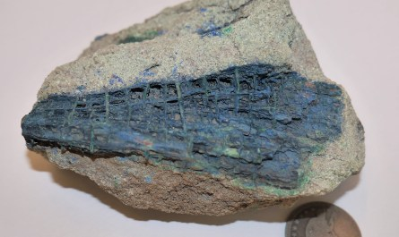 Azurite-mineralized fossil wood.