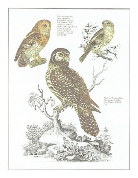 Free Printable owl art