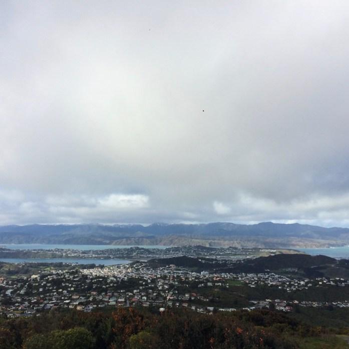 Wellington_Lost_In_Silver_Fern