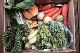 Where to buy Organic in Wellington Commonsense_Organics Fruit and Veg Box Wellington