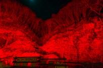 [α7S+SEL1635Z] ISO感度250, 絞り値f/8, 露出時間2秒, 16mm撮影合せ用の「あしがくぼの氷柱」看板前の赤色シーン。