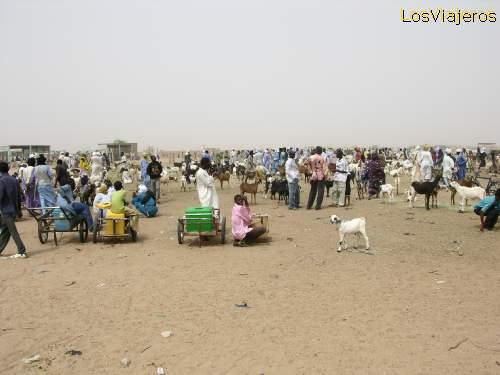 Mercado de ganado (cabras) -Agadez -NigerLivestock Market (goats)- Agadez -Niger