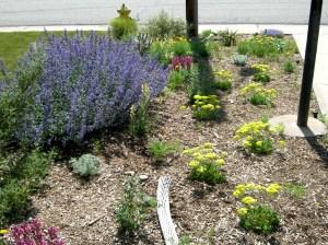Dry Xeriscape Garden