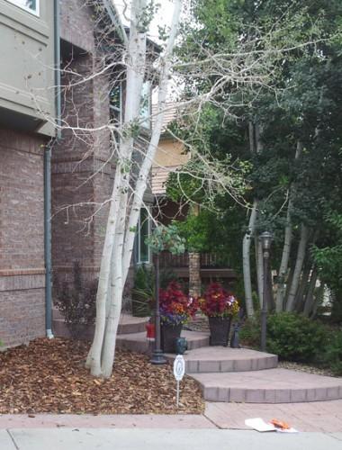 Aspen at Arvada Residence2