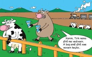 Çêlekên Holandî