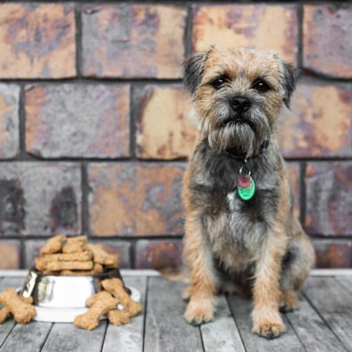 Dog Bikkies Baking Mix