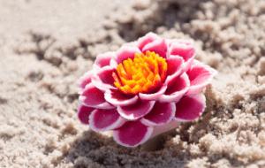 lotus-ruimt-op-lotus