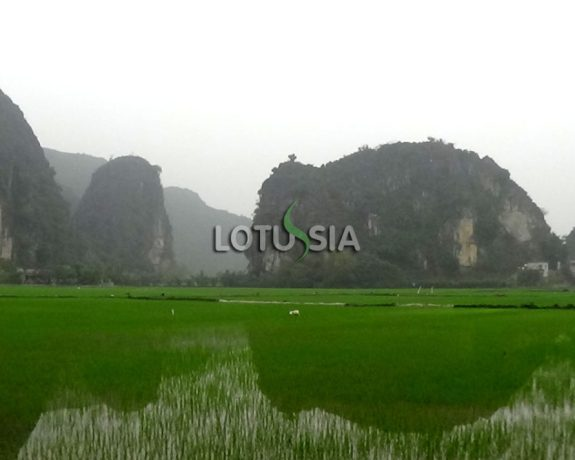 3 Day Trip from Hanoi to Halong Bay & Tam Coc