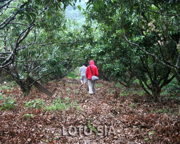 Bach Ma National Park Trekking Tour from Hue
