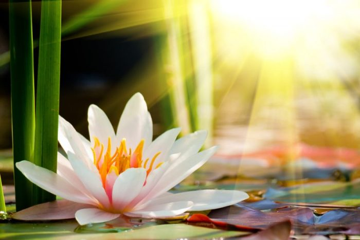 over lotus writings