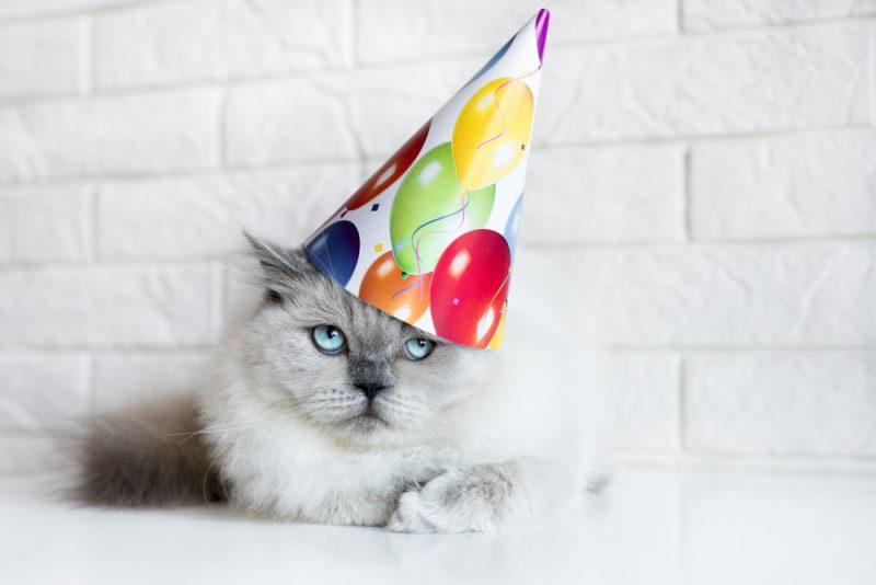 geen zin in andermans verjaardag
