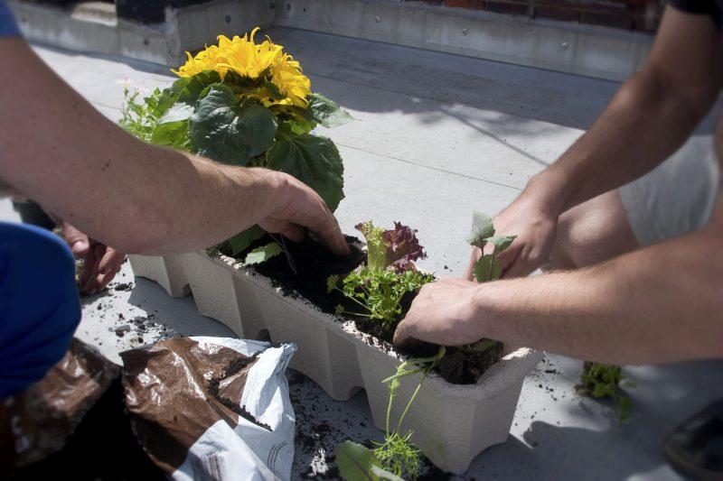 wat voor plantenbak kies je