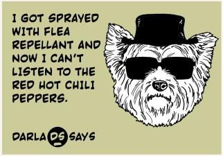 DARLA-SAYS-flea-RHCP