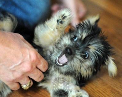 darla attack puppy
